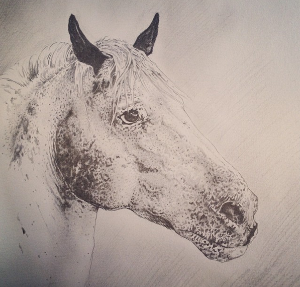 A little drawing of Buster, one of the horses at the stables where I volunteer. I'm not an expert with colour, but should you want a pencil or pen drawing of your favourite animal (birds and horses being my forté) then please do get in touch as I could perhaps do it in my spare time for a small fee in order to raise some funds for the stables.
