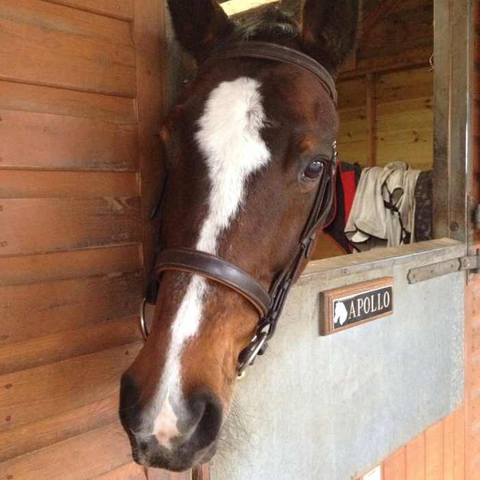 And for good measure, here's beautiful and sensitive Mona in the stable next door.