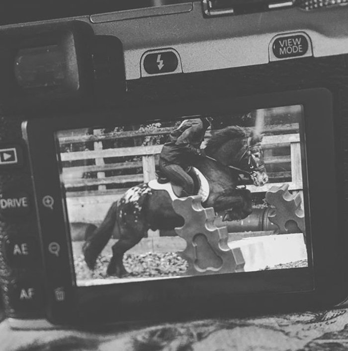 One of the Shetland ponies, jumping his little heart out. I'm taking him as my inspiration for the next month! What a hero.